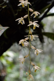 Trekked the jungles of Mount Kinabalu and found some of the rarest wild orchids in the world.